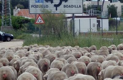 /media/noticias/fotos/pr/2021/10/23/pozuelo-entre-churras-y-merinas_thumb.jpg